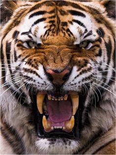 Un gato enojado | La Reserva