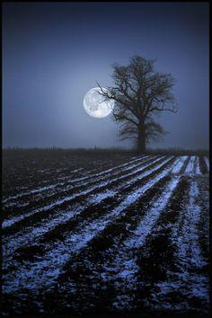 *Moonlight Sonata (by Keith Biddlestone)