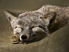 Sleeping by Arda Aytan, via 500px