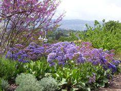 flowers in Kibbutz Alonim