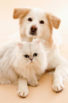 Studio Shot Of Cat And Dog >   A LOVE SHARED....................