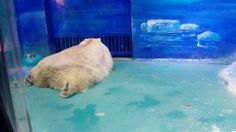A new zoo located inside a mall confines numerous animals in small, barren, dark rooms with little to no enrichment. If nothing is done, these animals will never see sunlight again. Sign this petition and demand the animals be moved to an accredited sanctuary.