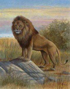 Big Cats Art, Cat Art, Lion Photography, Angry Animals, Lions Photos, Pembroke Welsh Corgi Puppies, Wild Animals Photos, Lion Poster, Lion Art