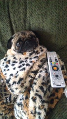 Pugtastic - snuggling and tv - this is all well and good, but I have no thumbs... so we're stuck watching the FOOD NETWORK!!
