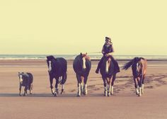 canter-commanche:  This is such a gorgeous picture! Edited the colours around a bit, Love how it turned out :)    // //
