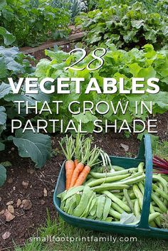Can you still grow some of your own food if your yard has shady spots? The answer is YES! Click here to get a list of 28 vegetables that grow in partial shade.