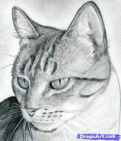 how to draw a cat head, draw a realistic cat step 11