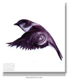 Beautiful paintings of birds by Adam S Doyle #art #painting #bird