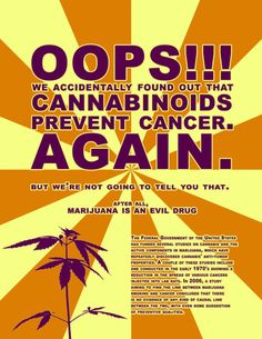 that awkward moment when you find out that the plant you want illegal actually prevents cancer ( marijuana cannabis). Don't forget, industrial hemp won't make anyone high! Cannabis Cures Cancer, Medical Cannabis, Cannabis Oil, Marijuana Facts, Cancer Cure, Cancer Cells, Liver Cancer, Breast Cancer, Hipster