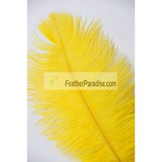 Yellow Ostrich Feathers Wholesale 10-12 inch 100 Pieces BULK DISCOUNT CHEAP DOZEN Wedding Centerpieces and Crafts
