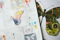 butterfly illustration. pretty in rainbow.