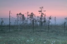 Bog in south Finland City Landscape, Landscape Pictures, Expo, Morning Light, Finland, Landscape Photography, Beautiful Places, National Parks, Landscapes