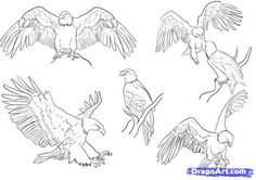 drawn bald eagle wings spread | how to draw eagles, draw bald eagles step 5