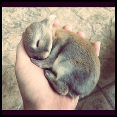 Baby Bunny is 10 Days Old - September 18, 2011