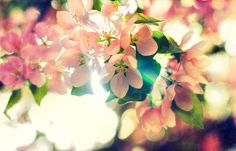 Blossoms of Spring | by Bardia Photography
