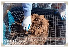 How To Prepare Soil for Planting Fruit Trees