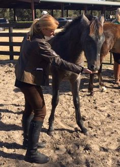 Mare Reproductive Cycles and Anxiety – The Horse