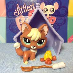 Littlest Pet Shop LPS RUST RED & CREAM FOX BLUE EYES #1126 w/ accessories
