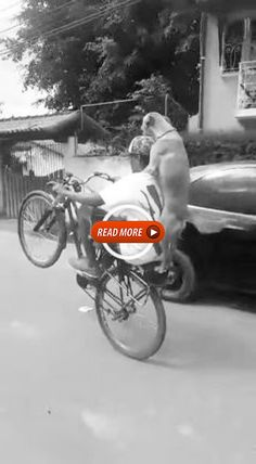 Pull Behind Motorcycle Trailer, Armadillo Eggs, Animal Categories, Antique French Furniture, Kitten Love, Good Morning Wishes, Make You Cry, Pot Pie, Cute Baby Animals