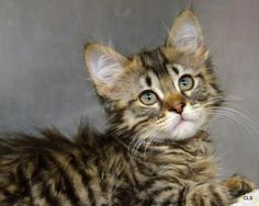 Hi, I'm Beth, an adorable 2-month-old kitten. I bet we could have so much fun together! #Kansas City #rescue #Wayside Waifs