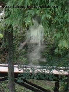 Metaphysical, scientific and philosophical ruminations on the paranormal. Scary Ghost Pictures, Real Ghost Pictures, Creepy Ghost, Ghost Images, Ghost Pics, Real Haunted Houses, Haunted Places, Paranormal Pictures, Spirit Ghost