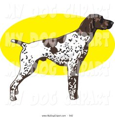 german shorthair pointer graphics | Clip Art of a Stern White and Brown Spotted German Shorthair Pointer ...