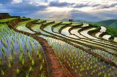 Rice terraces in Chiang Mai, Thailand - Still to do