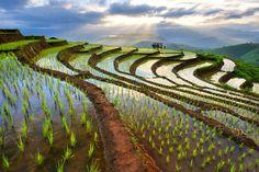 Chiang Mai rice terraces by Wanasapong Jaiinpol | 500px: Editors' Choice | Bloglovin'