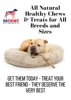 Healthy & Natural Chews and Treats that are 100% digestible. Much safer than rawhide products and with much more added benefits for your Dog. Natural Dog Treats, Best Friends, Teddy Bear, Puppies, Pet Products, Pets, Healthy, Nature, Animals