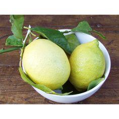 @Natoora unwaxed Amalfi lemons available at Ocado.