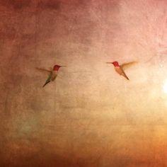 Hummingbirds /Hanson / Oil & Gold Leaf