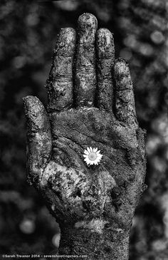 The purity of the flower amongst the dirt its surrounded by create a beautiful juxtaposition.