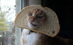sometimes i put my face through a piece of bread...