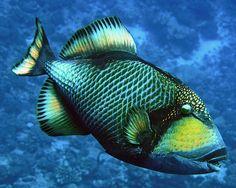 How To Get Started With Salt Water Fishing Underwater Life, Underwater Photos, Underwater Photography, Salt Water Fish, Marine Fish, Ocean Creatures, Exotic Fish, Sea And Ocean, Aquariums