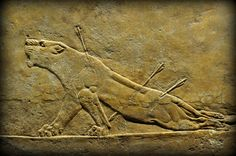 """ahencyclopedia: """" """"ASSYRIAN LION-HUNTING AT THE BRITISH MUSEUM: """" WHOEVER was privileged to gain access to the North Palace of the Assyrian king Ashurbanipal at Nineveh, could consider himself part of..."""