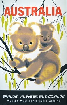 Australia Pan American Airlines travel poster: c 1950 koala bears Old Poster, Poster Ads, Advertising Poster, Typography Poster, Melbourne, Brisbane, Posters Australia, Australia Tourism, Pan Am