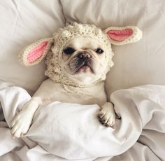 """""""If you sing Mary had a Little Lamb one more time, I swear I'm gonna......."""", annoyed French Bulldog."""