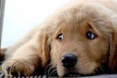 Resultado de imagem para cachorros fofos filhotes