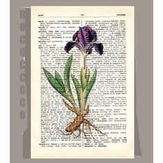 IRIS1 Artwork on a page from vintage Dictionary -Upcycled Book Print on Etsy, $9.95
