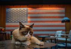 Grumpy Cat and Oskar the Blind Cat make a purrfect match in 'Cat Summer' music video.   BY Nicole Lyn Pesce, NEW YORK DAILY NEWS. Wednesday, July 16, 2014, 12:04 PM