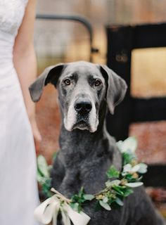 Dog in a flower garland | Melanie Gabrielle Photography |