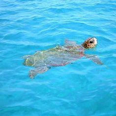 Loggerhead turtle, i saw swimming @Efie Papaioannou, Greece.