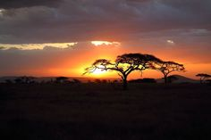 The magic of the serengeti. One of my favourite pics from my trip, I posted this a little while back but I hadn't worked out how to stop the cropping (I only bought my first camera last year for this trip). This is how it's suppose to look  #africa #sunset #serengeti #tanzania #safari #travel #trees #sky #wilderness #outdoors #canon http://tipsrazzi.com/ipost/1509116134295720925/?code=BTxdSDlgdPd
