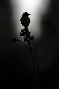 Black & white photography - bird