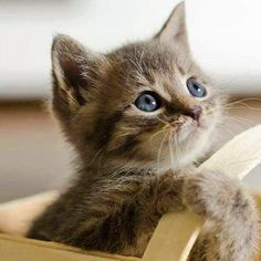 Cute Fluffy Kittens, Cute Cats And Kittens, Cool Cats, Kittens Cutest, Kitty Cats, Kitten Images, Kitten Photos, Unique Cats, Cat Photography