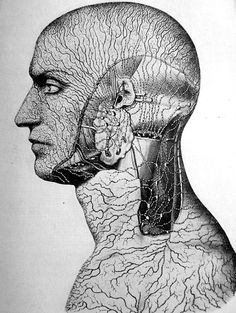 The lymph organs of the body surface, from Fritz Kahn's Man in Structure & Function, 1939