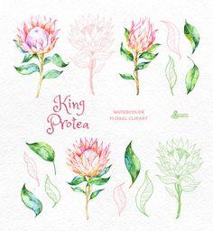 King Protea. Watercolor floral Clipart wedding от OctopusArtis