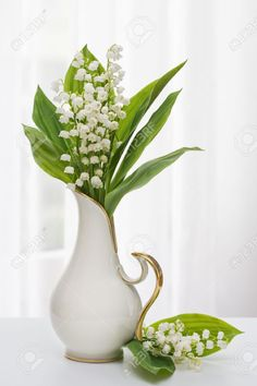Lilly Of The Valley In Vase With Window Light Stock Photo, Picture And Royalty Free Image. Image 11485668.