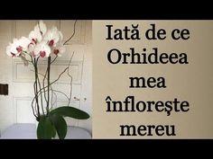 🍀 De ce nu infloreste orhideea? 10 aspecte la care sa acorzi atentie   Eu stiu TV - YouTube Places To Visit, Youtube, Home Decor, Plant, Decoration Home, Room Decor, Home Interior Design, Youtubers, Youtube Movies