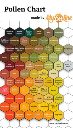 Pollen identification color guide MyBeeLine is part of Bee hive plans - Honey Bee Hives, Honey Bees, Honey Bee Garden, Raw Honey, Bee Hive Plans, Beekeeping For Beginners, How To Start Beekeeping, Raising Bees, Bee Boxes